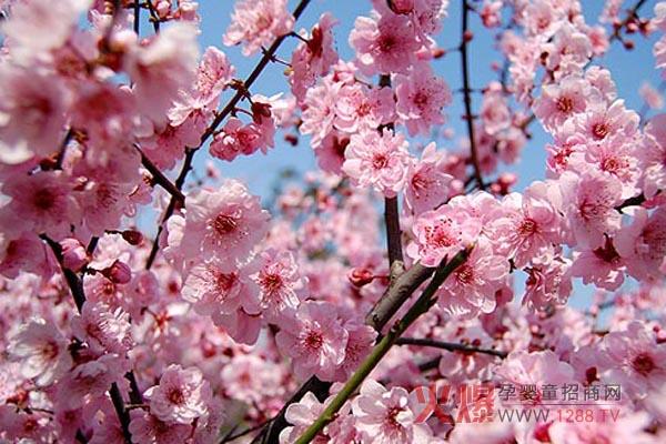 粉红浪漫风景图片