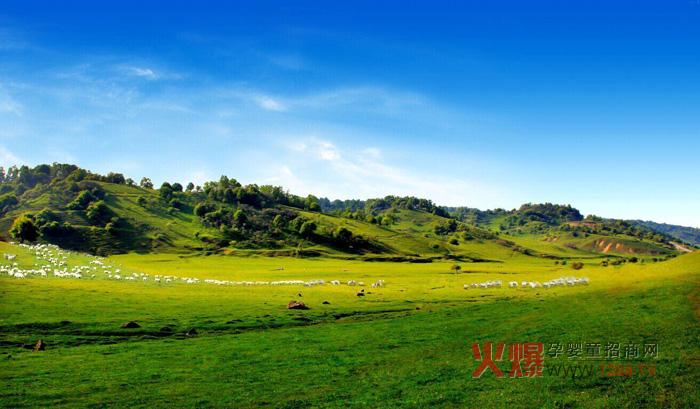 关山乳业生态牧场黄金奶源地 高效管理成就黄金品质