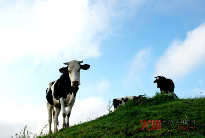 乳业行业近况:国内原奶价格继续低位运行